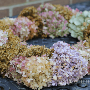 dried hydrangea wreath side view