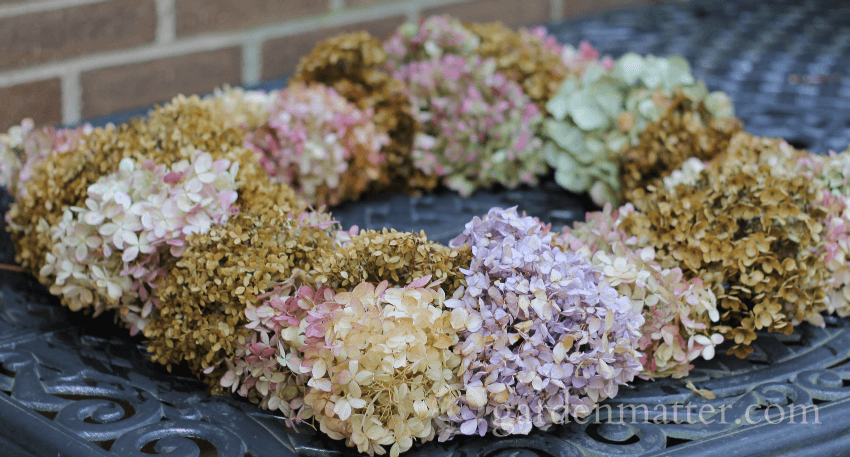 dried hydrangea wreath side view