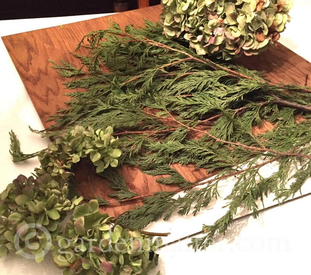 Dried Hydrangea and Cedar
