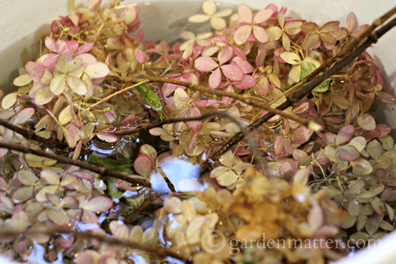 Dried flowers soaking in water