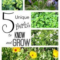 5 herbs to know & grow ~ gardenmatter.com