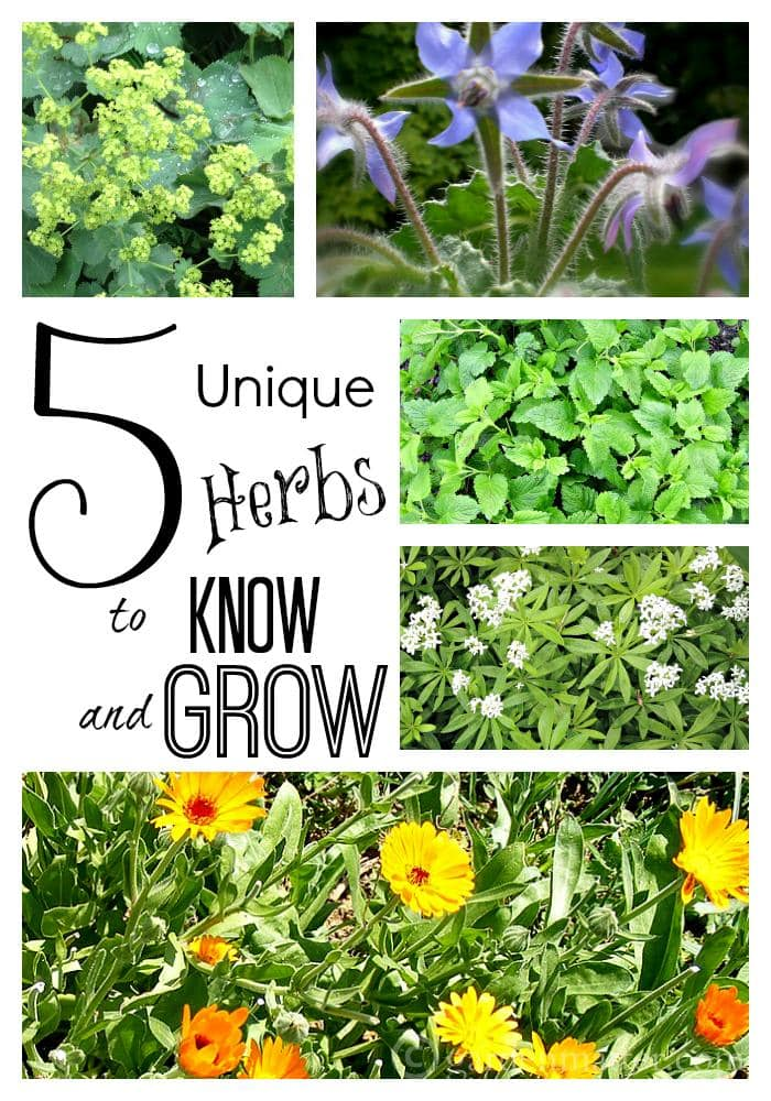 5 unique herbs to know & grow collage