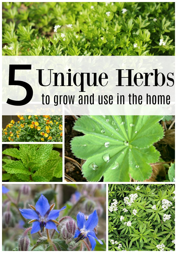 Five herbs that are unusual to grow in the garden.