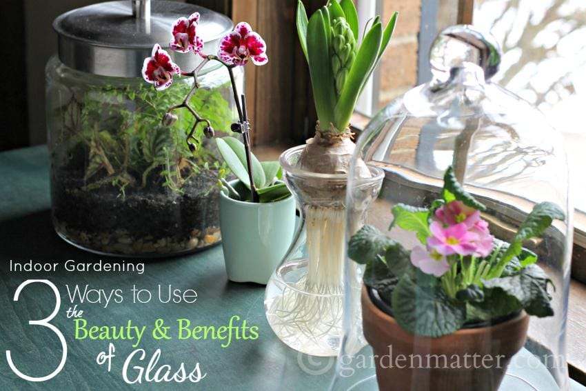 Learn about the beauty and benefits of glass for indoor gardening