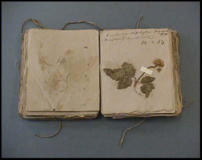 Herbarium by Amos Eaton - 1830 ~ gardenmatter.com