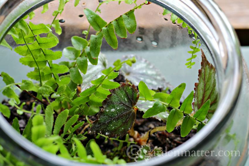 Terrarium - Beauty & Benefits of Glass for Indoor Gardening ~ gardenmatter.com