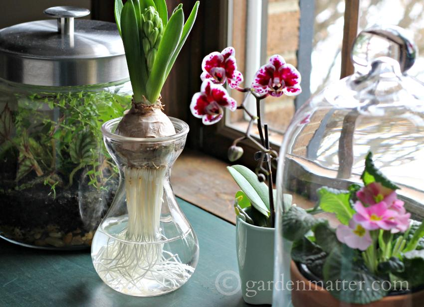 Gardening Indoors: 3 Ways to Use the Beauty of Glass