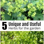 5 unique and useful herbs