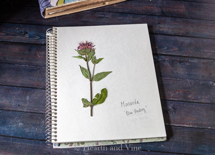 monarda stem in book