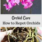 Orchid blooms and orchid roots