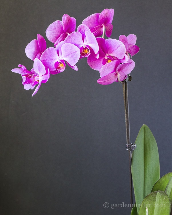 Learning about orchids and how to re-pot them.