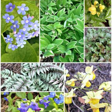 Collage of unique shade perennial flowers