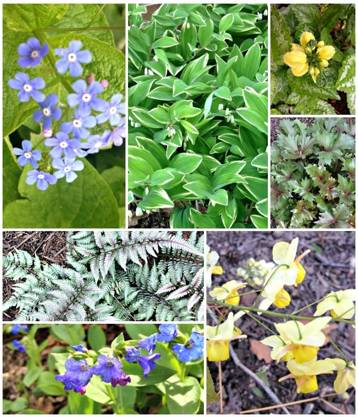 Collage of unique shade loving perennials
