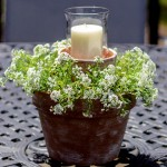 Clay pot with flowers and candle