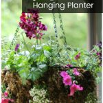 Sphagnum moss hanging planter