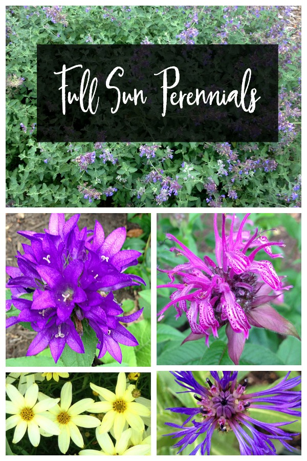 Collage of sun loving perennials for pinterest