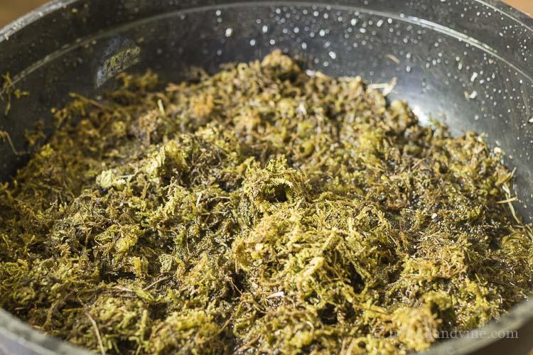 Sphagnum moss soaking in water