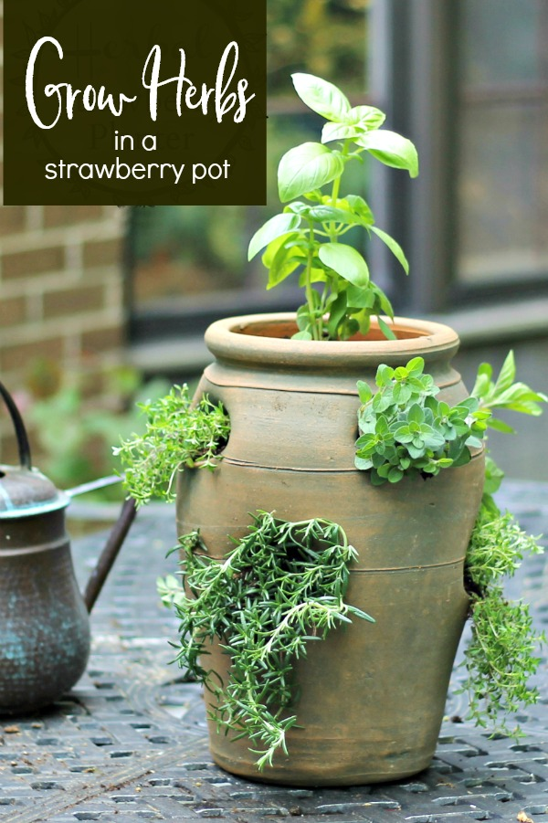 strawberry pot with herbs