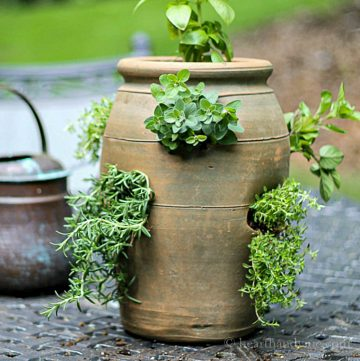Herbs in a strawberry pot