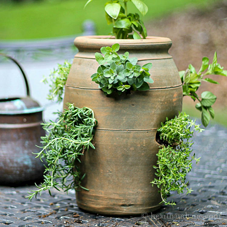 Growing Herbs In A Strawberry Pot For Easy Access And Small Spaces Gardening