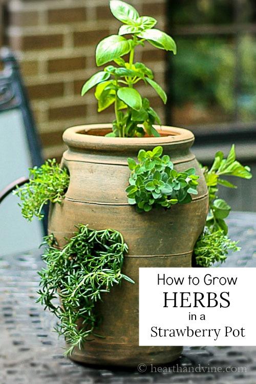 Herb garden in a strawberry pot