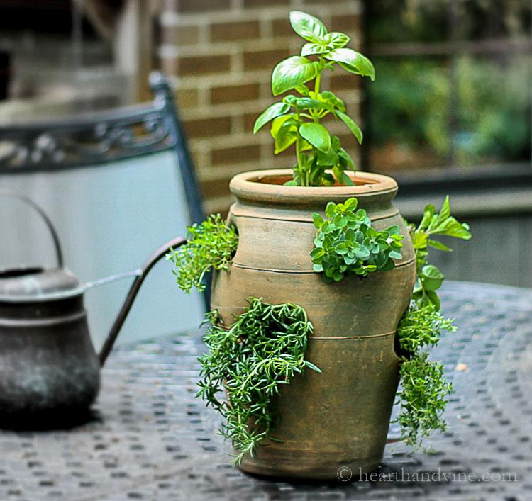 Herb planter in strawberry pot