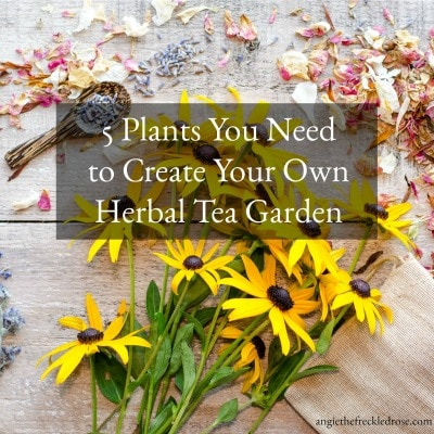 Herbal Tea Garden Plants