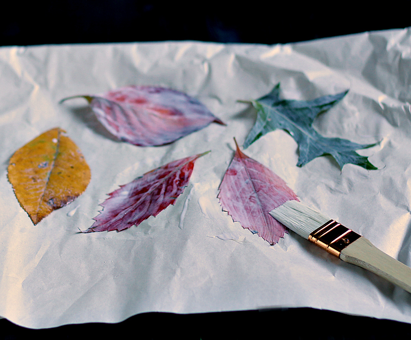 Coating leaves with Mod Podge