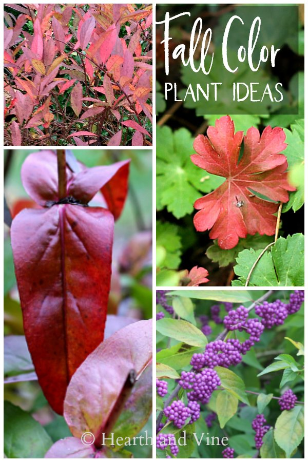 Plants with fall color