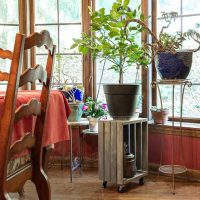 rolling plant stand in front of window