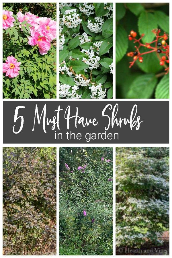 shrub collage