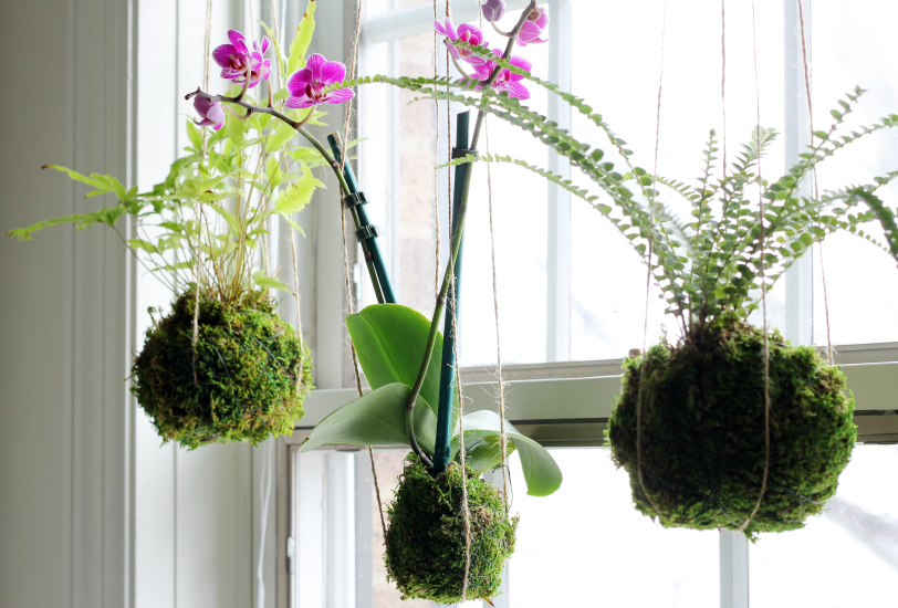 Kokedama How To Create A Moss Ball String Garden