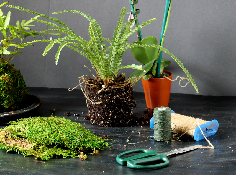 Kokedama supplies plants moss string scissors