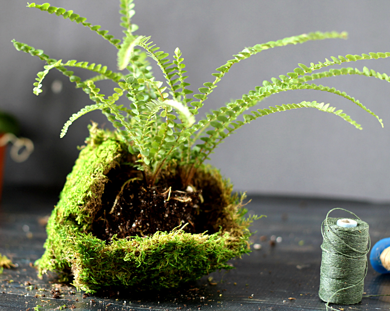 fern covered with moss