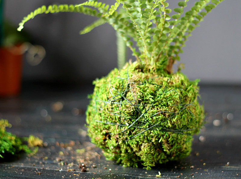 plant with moss wrapped in twine