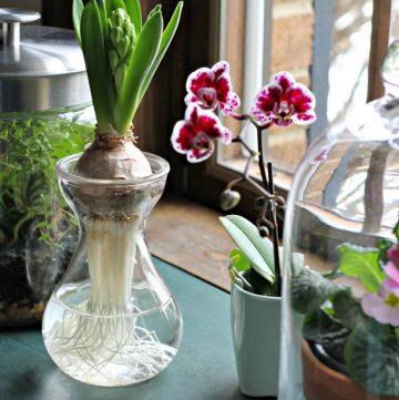 glass indoor garden ideas