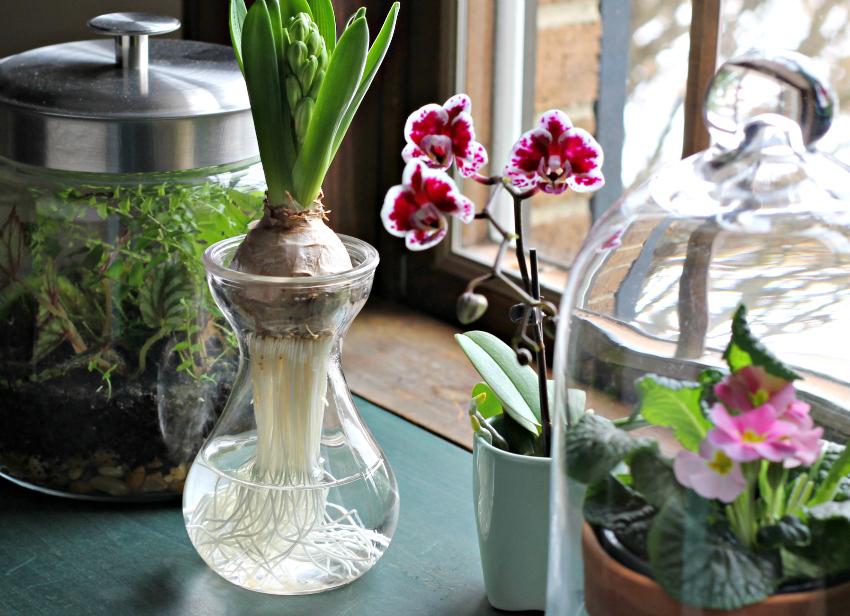glass indoor garden examples