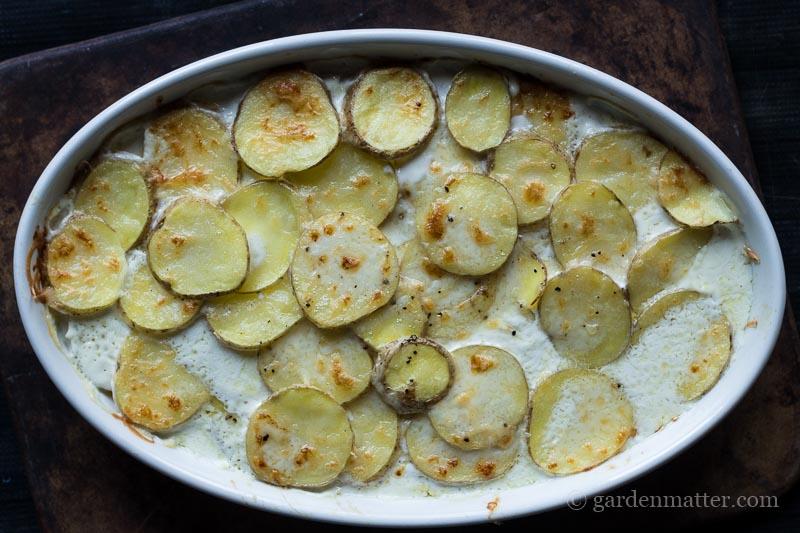 finished casserole ~ scalloped potatoes ~ gardenmatter.com