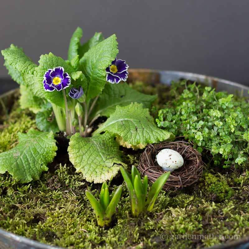 moss garden for spring ~ mini moss garden ~ gardenmatter.com