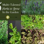 5 Multi-Talented Useful Herbs To Grow - gardenmatter.com