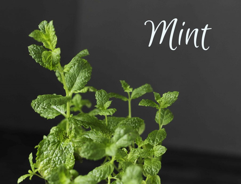 Mint ~ 5 useful herbs