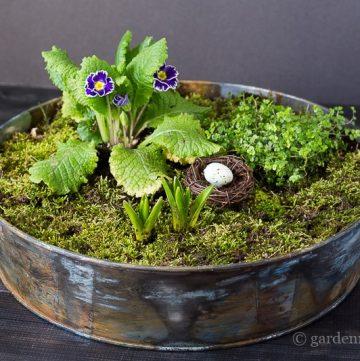 Moss and flowers in tray ~ mini moss garden ~ gardenmatter.com