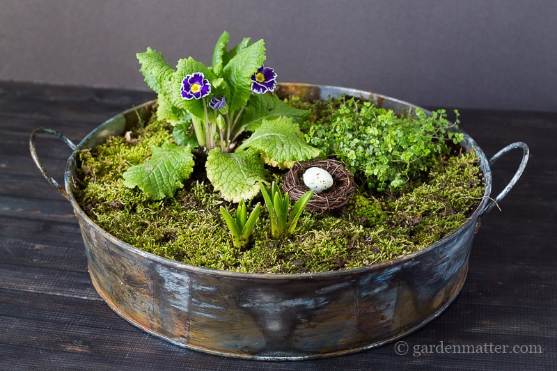 Mini Moss Garden Centerpiece