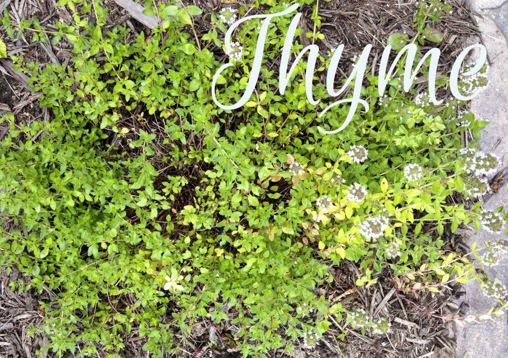 Thyme ~ multi-talented useful herbs