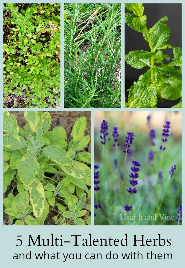 Learn about 5 multi-talented useful herbs for your garden. Easy to grow perennials with many uses in the home.