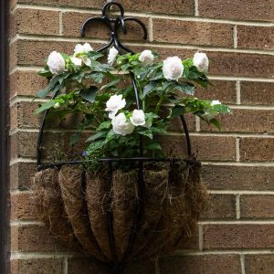 Annual Double Impatiens ~ Plant Life Cycles ~ gardenmatter.com