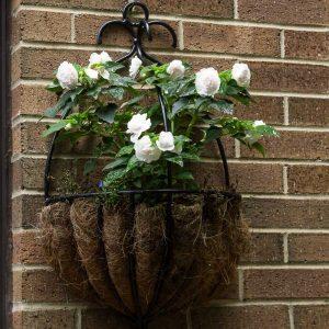 Annual Double Impatiens ~ Plant Life Cycles ~ gardenmatter.com