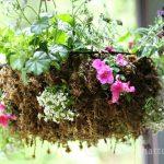Hanging-Sphagnum-Moss-Planter-gardenmatter.com
