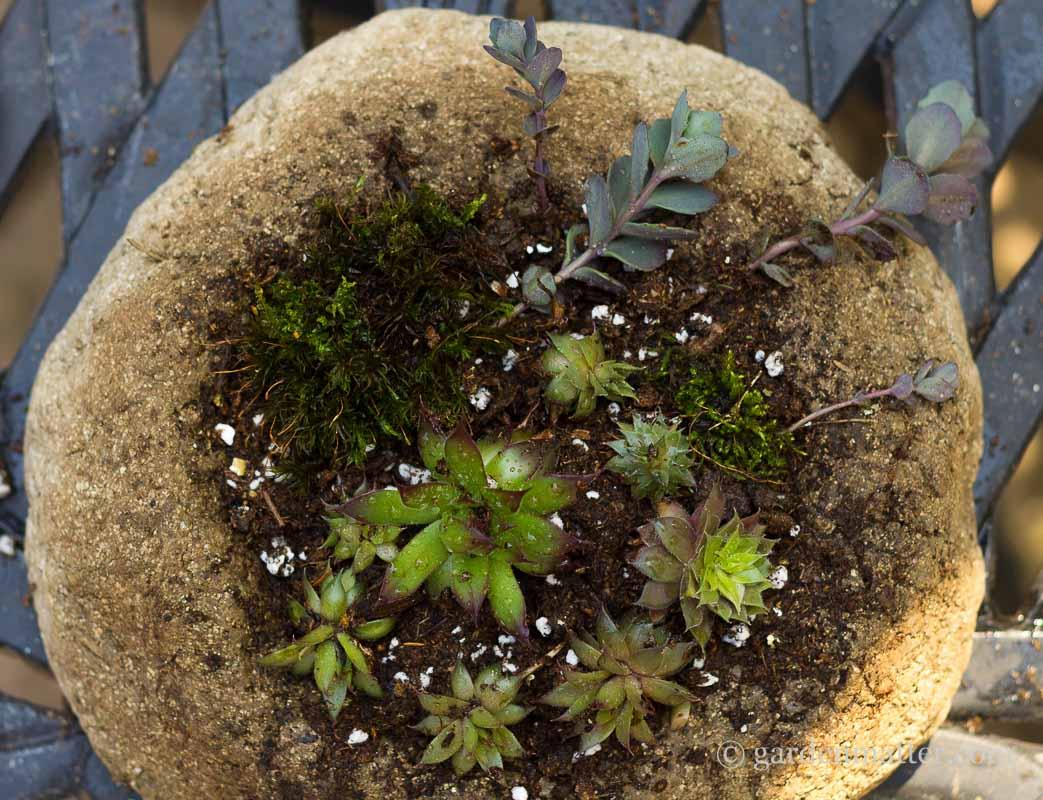 Hypertufa with sedums and moss ~ Freeform Hypertufa Planter ~ gardenmatter.com
