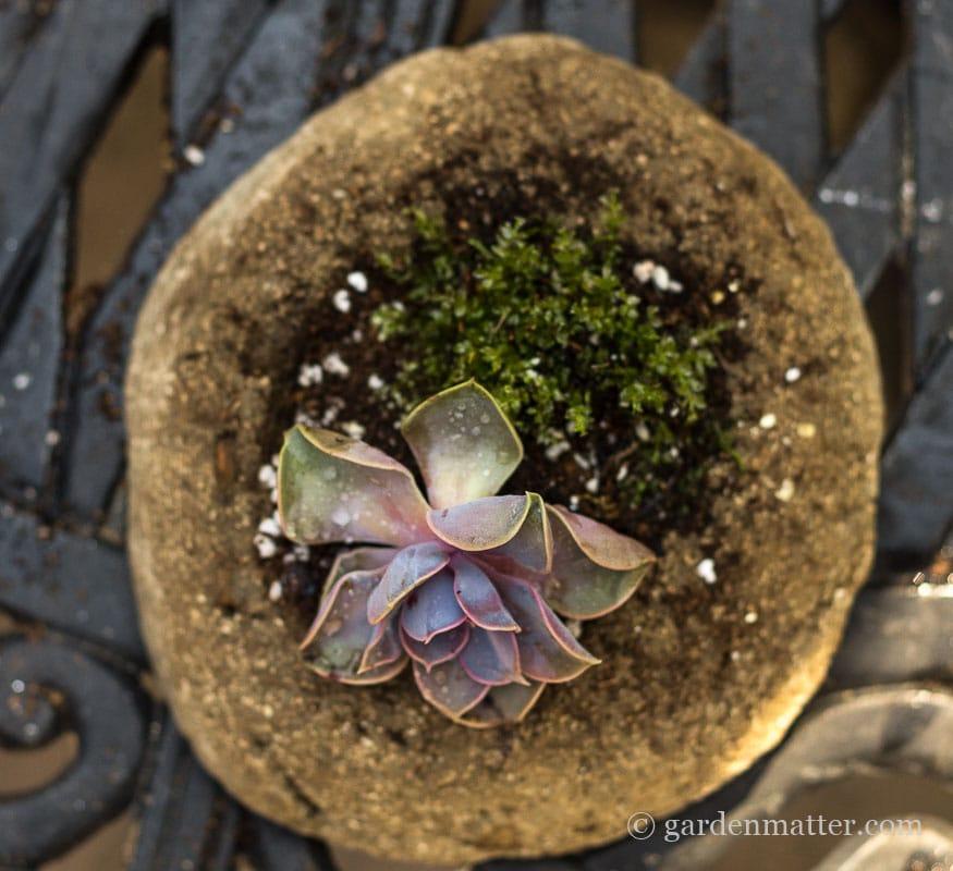 Hypertufa with sempervivum & moss ~ Freeform Hypertufa Planter ~ gardenmatter.com